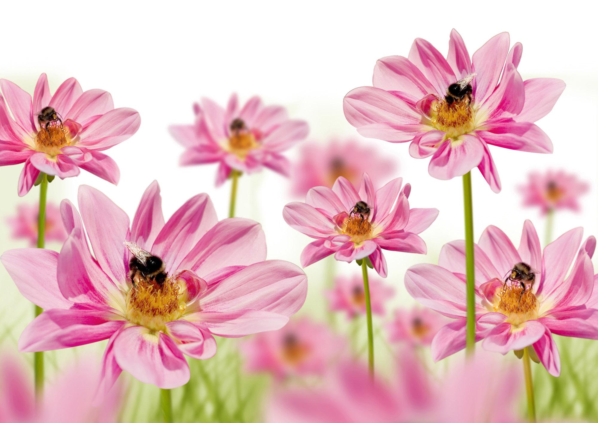 foto de Flower Power   Teespring